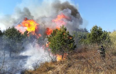 Упродовж доби рятувальники ліквідували 4 пожежі у лісових масивах