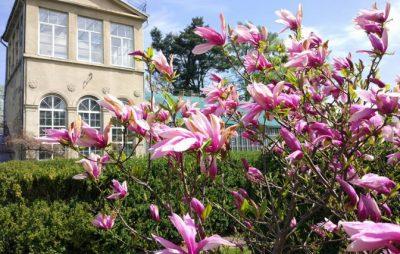 Ботанічний сад запрошує на День відкритих дверей. Фото: відкриті джерела.