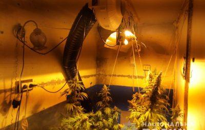 На Львівщині у гаражі вирощували коноплю. Фото: ГУ НП у Львівській області.