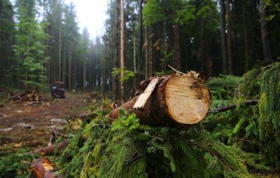 На Львівщині засудили працівника лісопідприємства. Фото: 5 Канал.