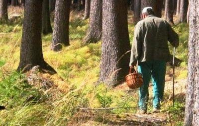 На Львівщині розшукали чоловіка, який блукав лісом п'ять діб. Фото: відкриті джерела.