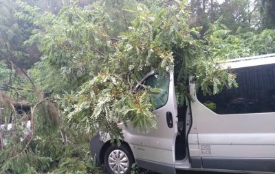 Як на міжнародній трасі на Львівщині дерево понищило автомобілі. Фото Варта-1