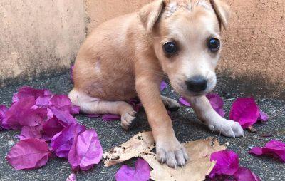 У Соле собаці врятували життя