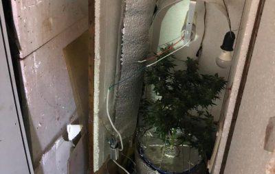 Як Льв'янин у гаражі вирощував канабіс. Фото: Нацполіція.