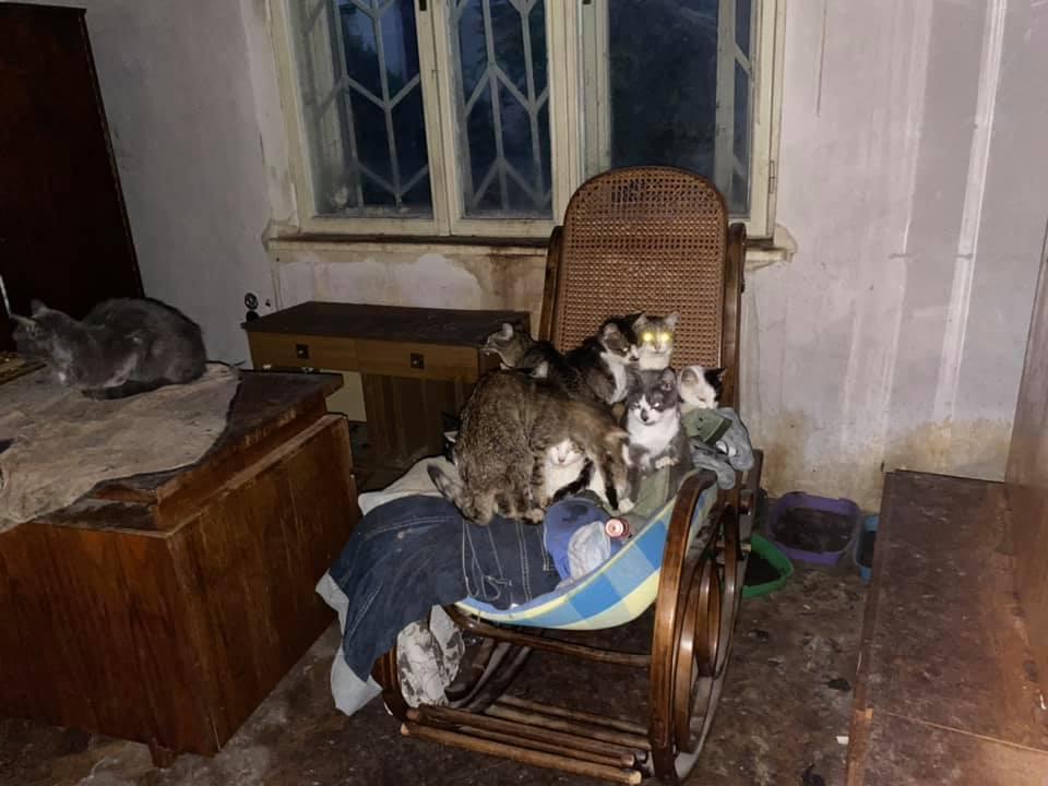 У Львові для котів, господарка яких померла, продовжують шукати домівки